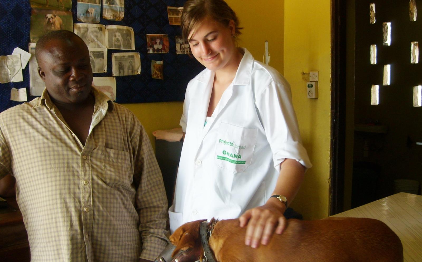 ガーナで獣医療活動に取り組むインターン